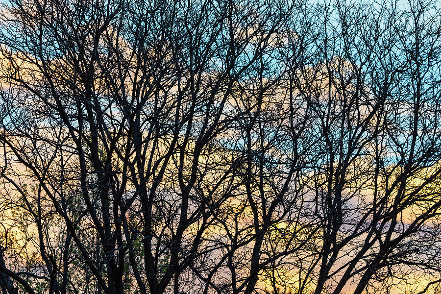 Tree Branches And Colorful Clouds Photograph
