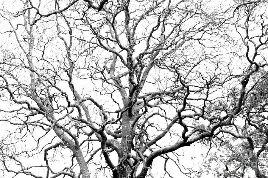 Tree Photograph - Tree Branches by Gaspar Avila
