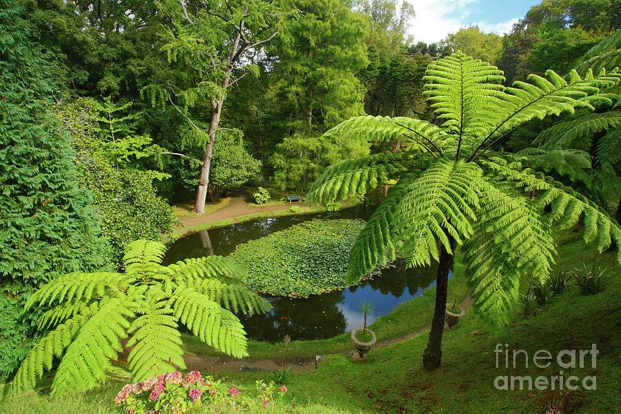 Tree Ferns Photograph - Tree Ferns by Gaspar Avila