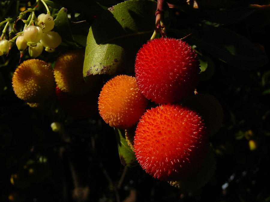 Fruit Photograph - Tree Fruit by Terry Perham