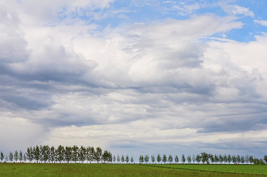 Tree Line Photograph