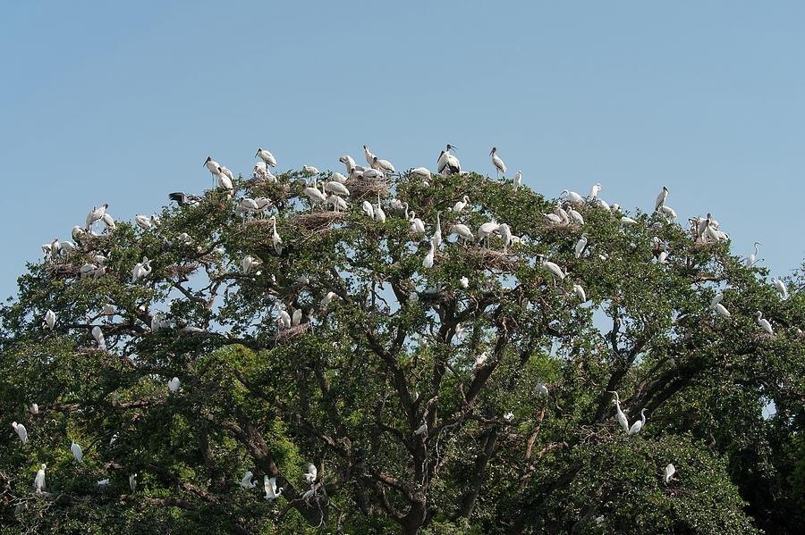 Tree Of Bird Life Photograph
