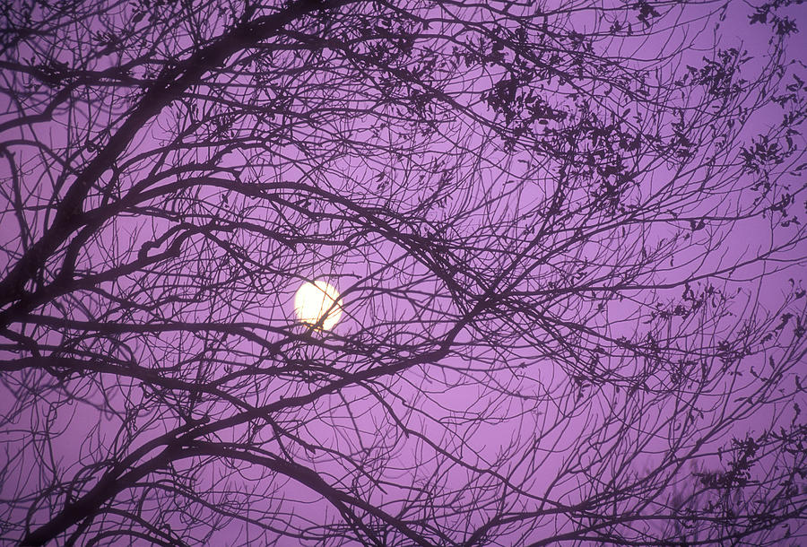 Tree Silhouettes With Rising Moon In Cades Cove, Great Smoky Mountains National Park, Tennessee, Usa Photograph