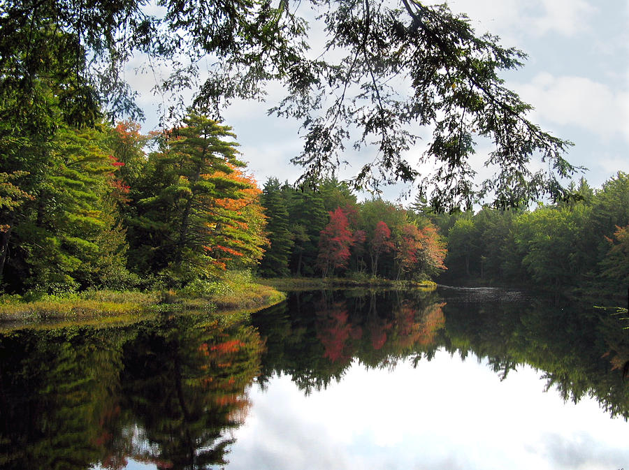 Landscape Photograph - Trees And Pond by Joe Maranzano