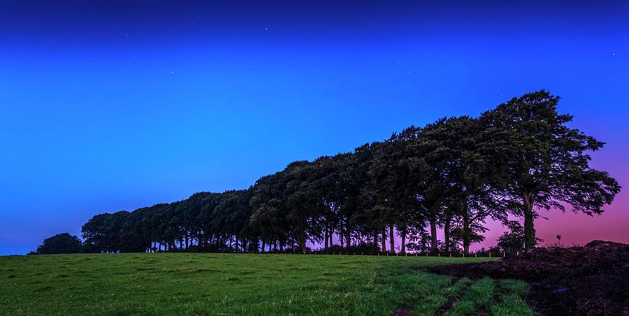 Trees At Dawn Photograph