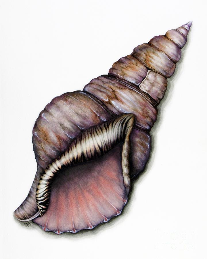 Seashell Painting - Tritons Trumpet by Christina Meeusen
