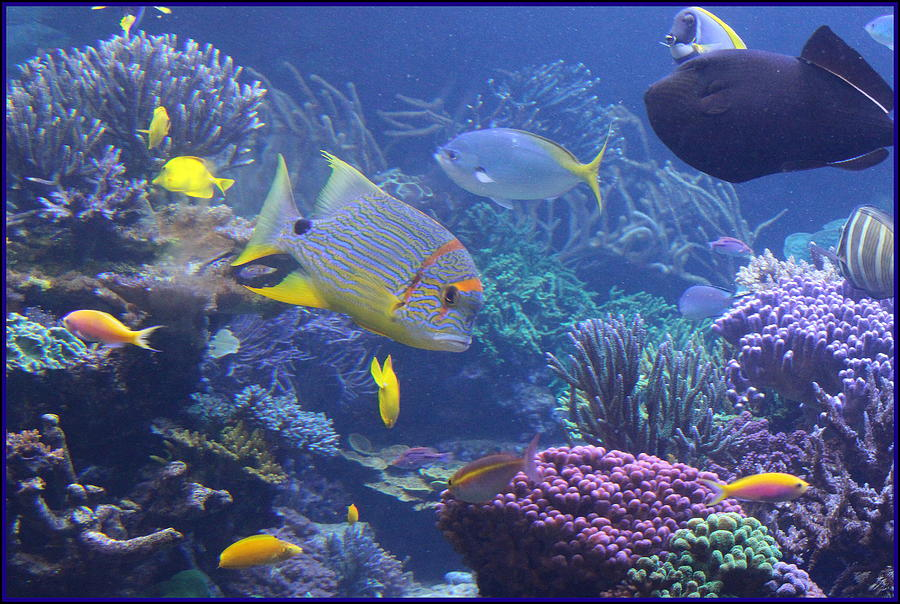 Tropical Photograph - Tropical Fish And Coral Reefs by Dora Sofia ...