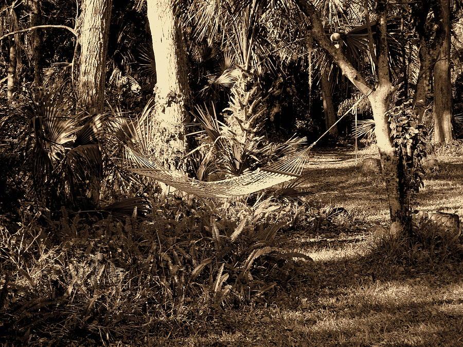 Tropical Hammock Photograph