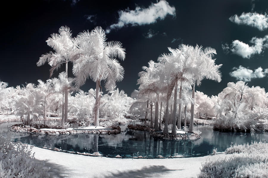 Tropical Paradise Infrared Photograph