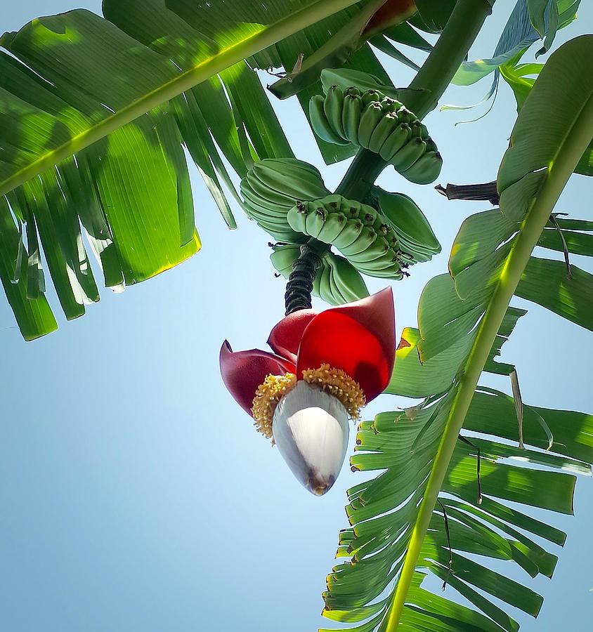Tropical Scene II Photograph