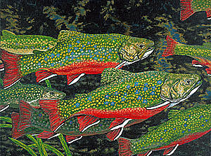 Art Painting - Trout Art Brook Trout Fish Artwork Giclee Wildlife Underwater by Baslee Troutman
