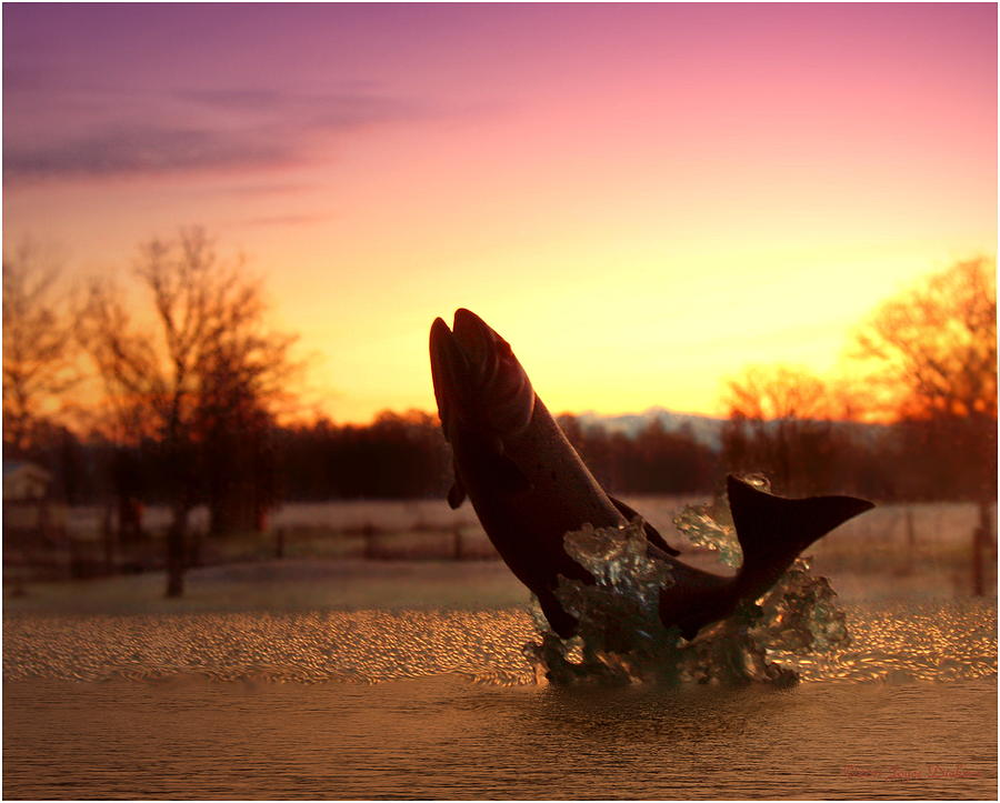 Trout Photograph - Trout Sunrise by Joyce Dickens