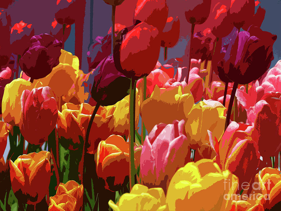 Tulips Photograph - Tulip Confusion by Sharon Talson