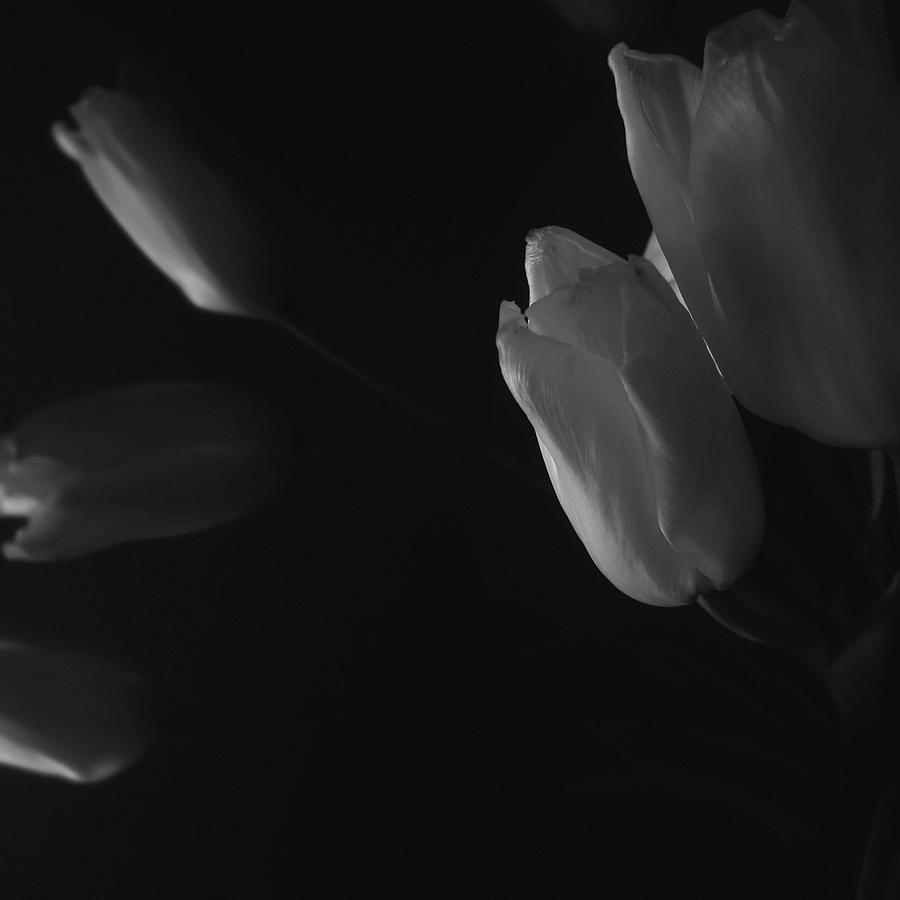 Tulips Photograph - Tulip Service by Marcus Hammerschmitt