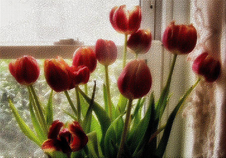 Flower Photograph - Tulips by Karen M Scovill