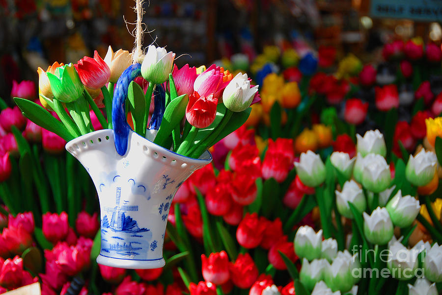 Tulips N Amsterdam Photograph