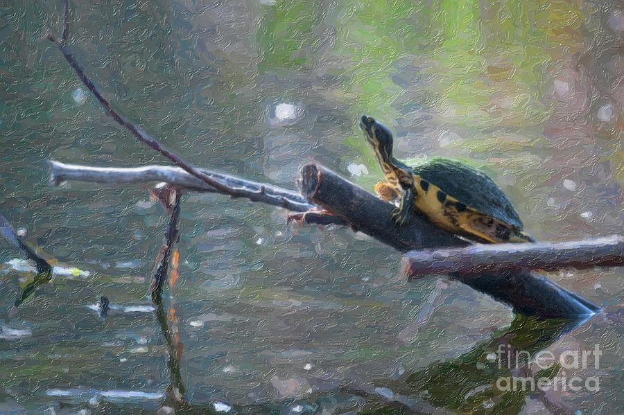 Turtle Stump Sunning Digital Art