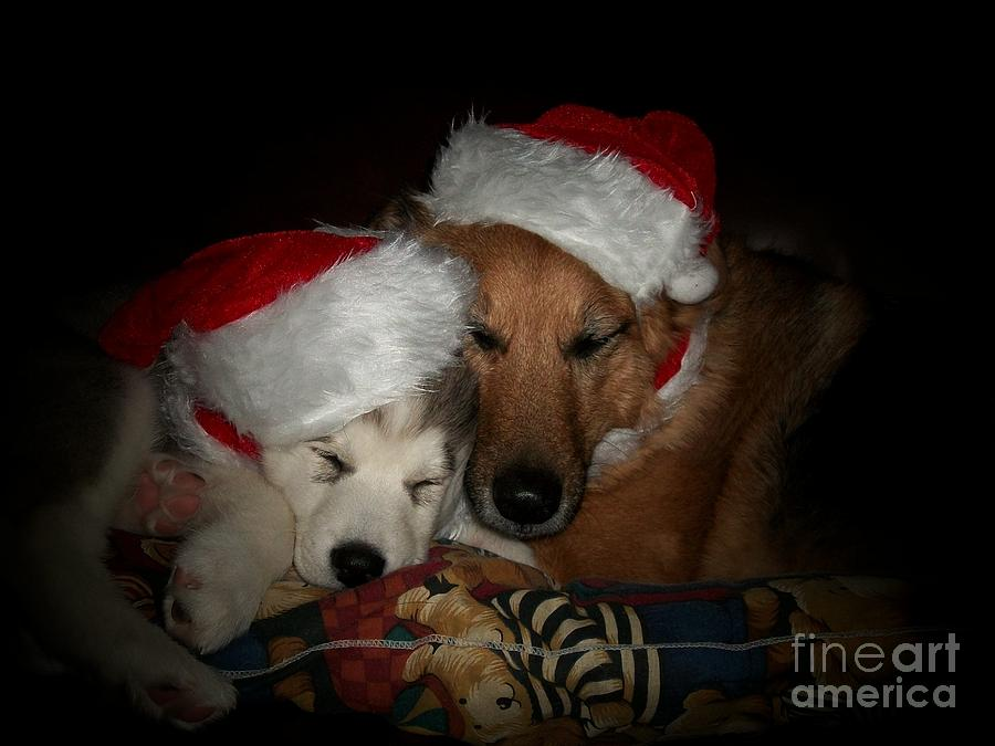 Dog Photograph - Twas The Night Before Christmas by Marjorie Imbeau