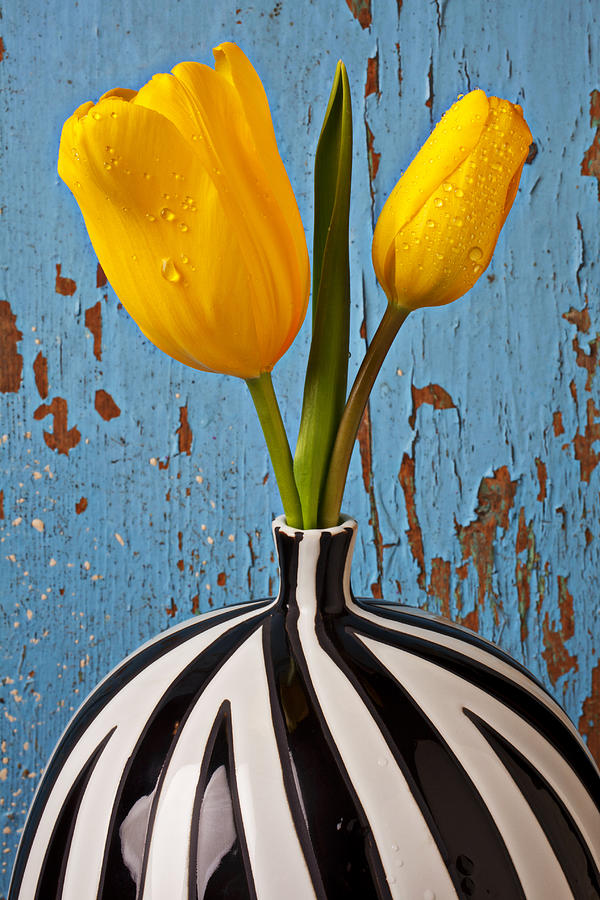 Two Yellow Photograph - Two Yellow Tulips by Garry Gay