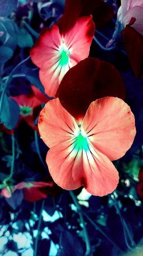 Tie Dye Flowers Photograph By Missy Brage