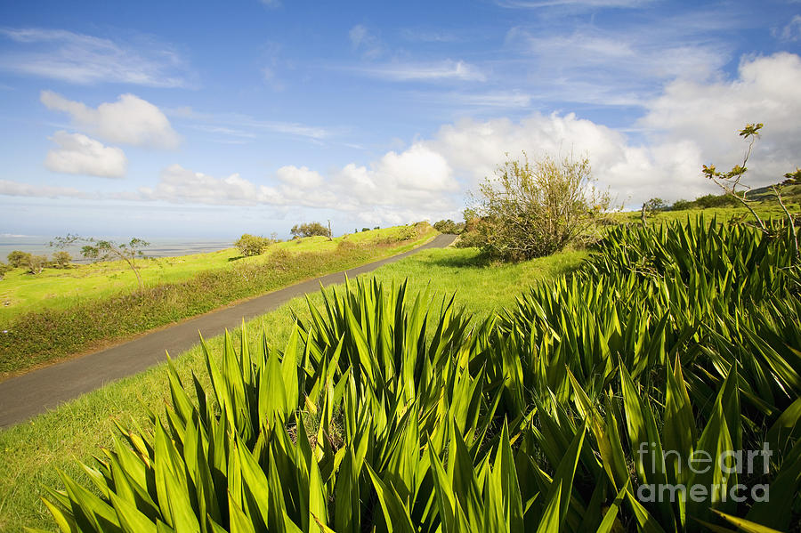 Afternoon Photograph - Ulupalakua Country Road by Ron Dahlquist - Printscapes
