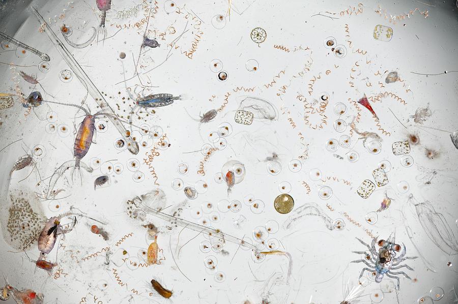 Studio Shot Photograph - Under A Magnifier, A Splash Of Seawater by David  Liittschwager