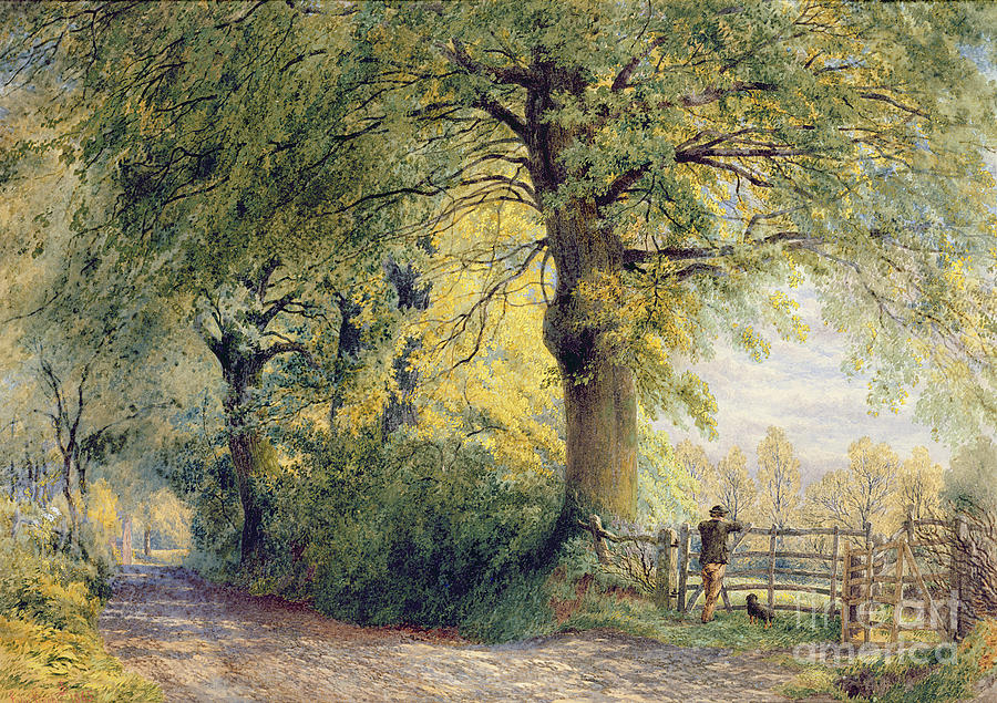 Under The Beeches (oil On Canvas) By John Steeple (1823-1887) Painting - Under The Beeches by John Steeple