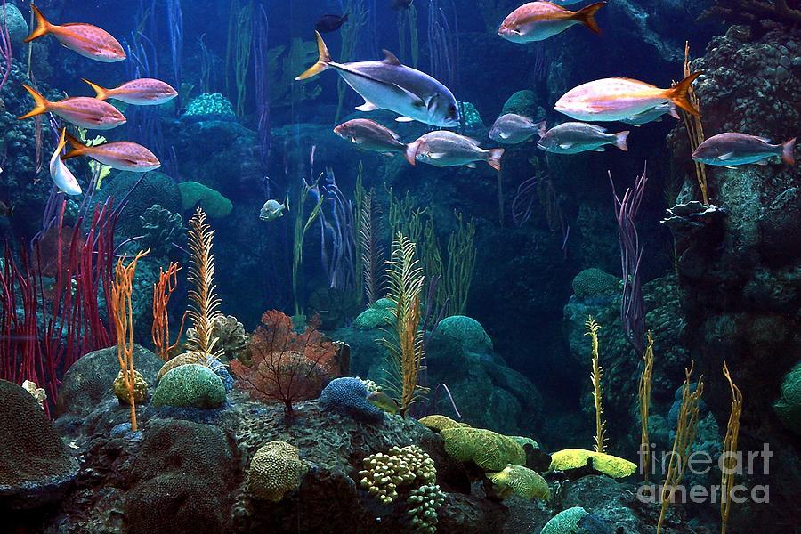 Fish Photograph - Under The Sea 3 by Randy Matthews