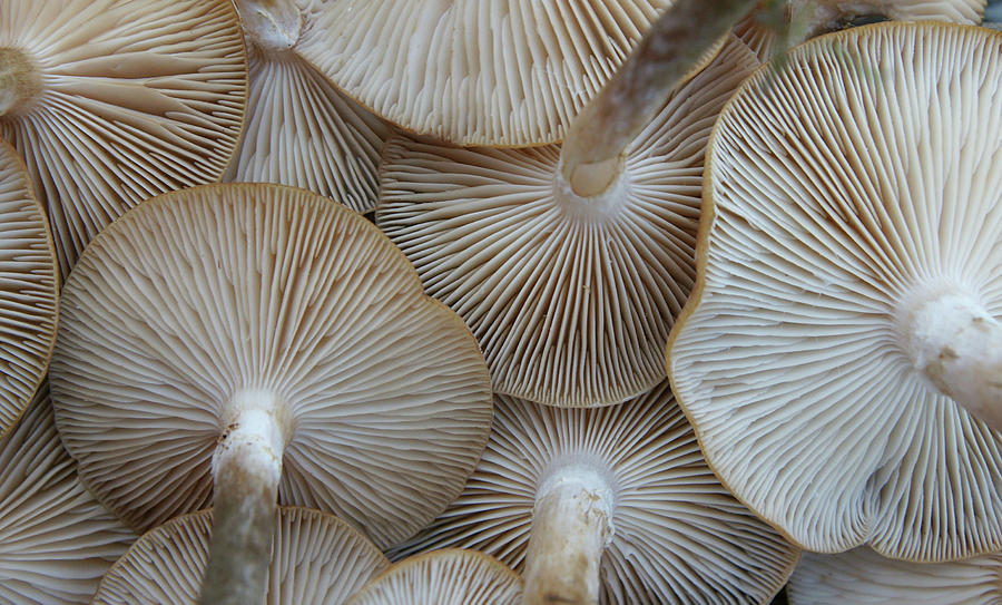 Horizontal Photograph - Underside Of Mushrooms by Greg Adams Photography