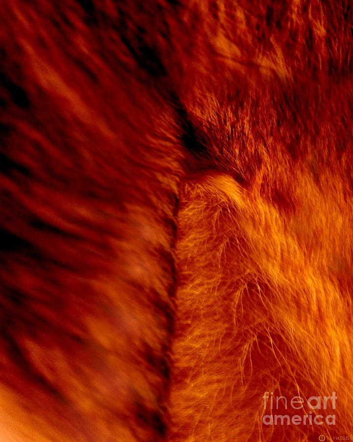 Abstract Digital Art - Untamed Vortex by P Russell