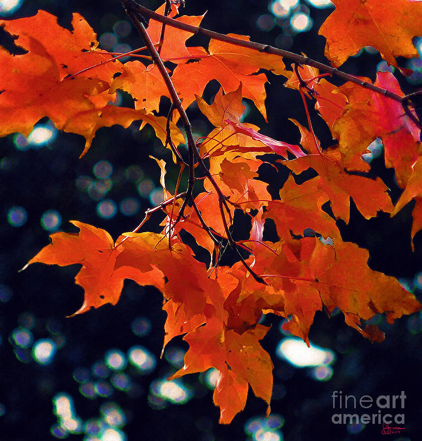 Fall Photograph - Untitled 24 by Jeff Breiman