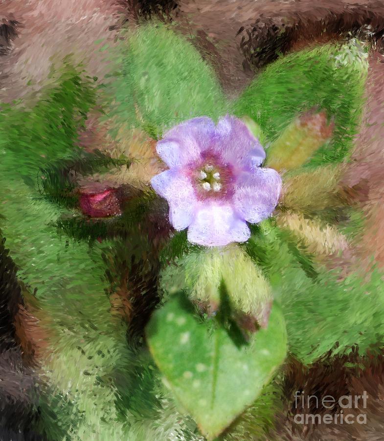 Digital Photo Photograph - Untitled Floral -1 by David Lane