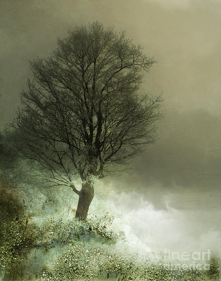 Tree Photograph - Upon The Windowsill Of Heaven by Jan Piller