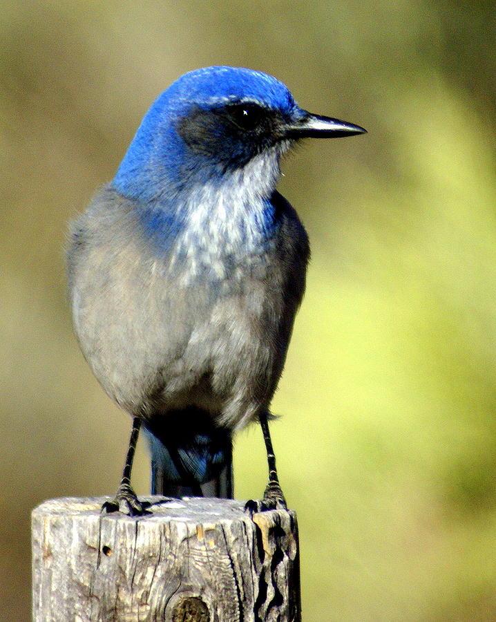Birds Photograph - Utah Bird by Marty Koch
