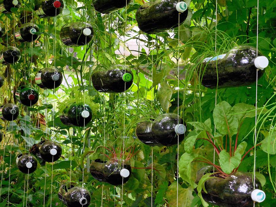Vegetable Growing In Used Water Bottle 1 Painting By