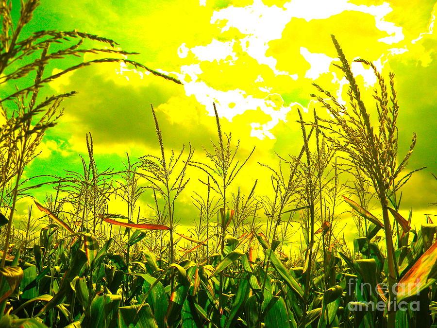 Corn Photograph - Vegetable Soul by Chuck Taylor