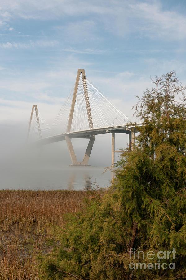 Vertical Fog Photograph