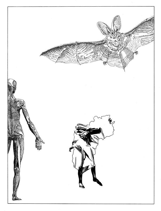 Vesalius Drawing - Vesalius Bat Thing by Stan  Magnan