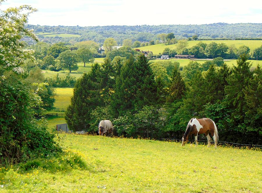 Landscape Photograph - View To Kill For by Linda Corby