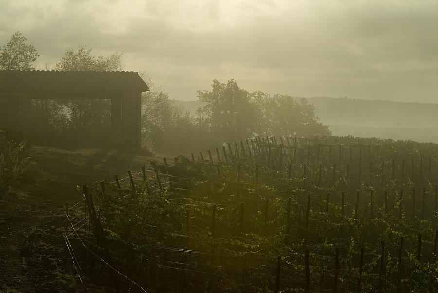 Vineyards Photograph - Vineyards Beside A Villa In The Fog by Todd Gipstein