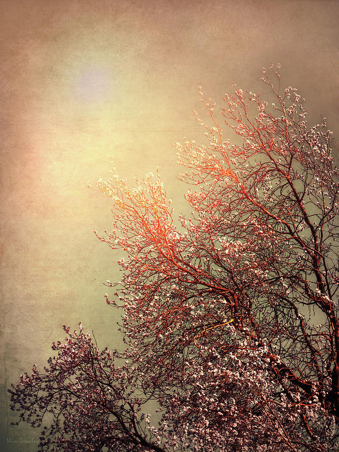 Vintage Photograph - Vintage Cherry Blossom by Wim Lanclus
