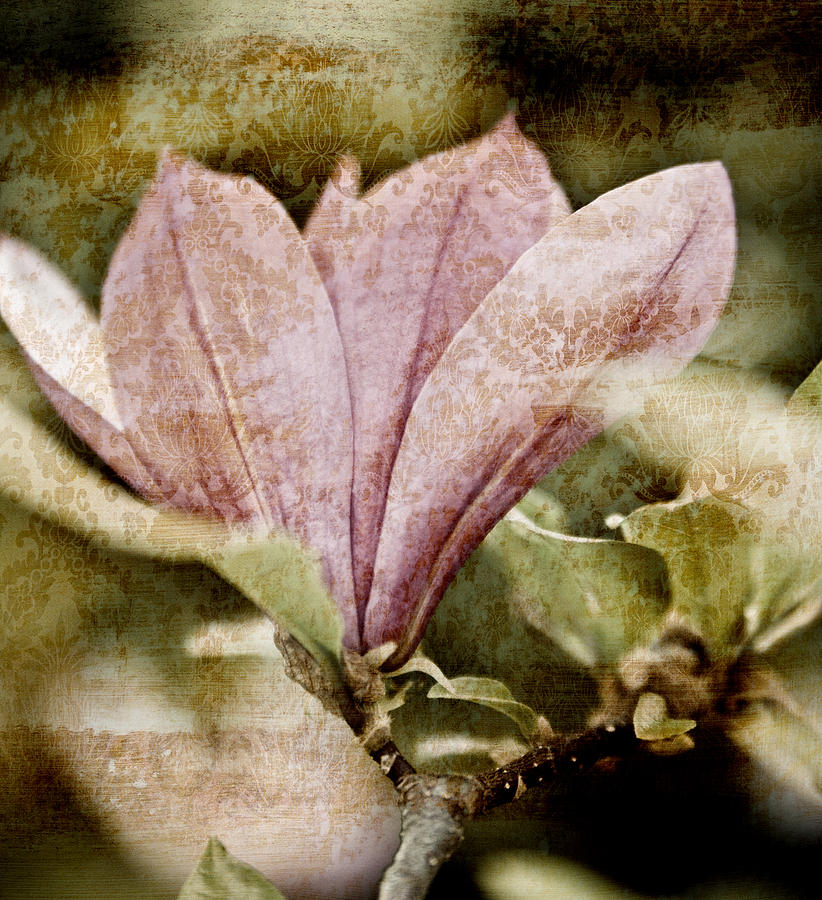 Magnolia Flower botanical Art Nostalgia vintage Magnolia Botanical Art Botanic Botany Flowers Vintage Retro Grunge Pink Floral Florals Garden Gardening Gardens Gardener Old Antique Antiques Shabby Chic country Living old Fashioned Abstract Abstracts old Time Nostalgic Scratched Beautiful Pretty Pale Sepia Black And White Bw Ancient old Times old Time Contemporary Modern Design Designs Texture Textured Painting Paintings Print Prints Brown Browns modern Art Mixed Media - Vintage Magnolia by Frank Tschakert