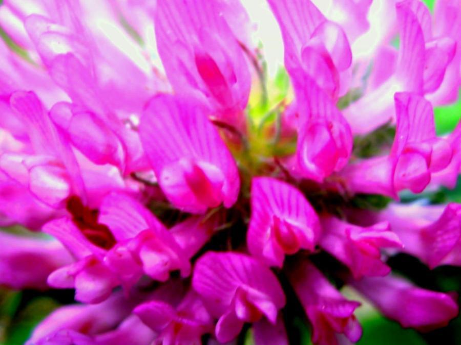 Violet Photograph