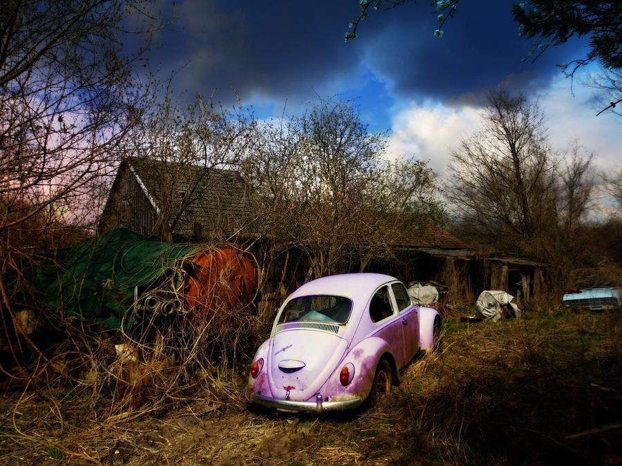 Volkswagen Graveyard Photograph