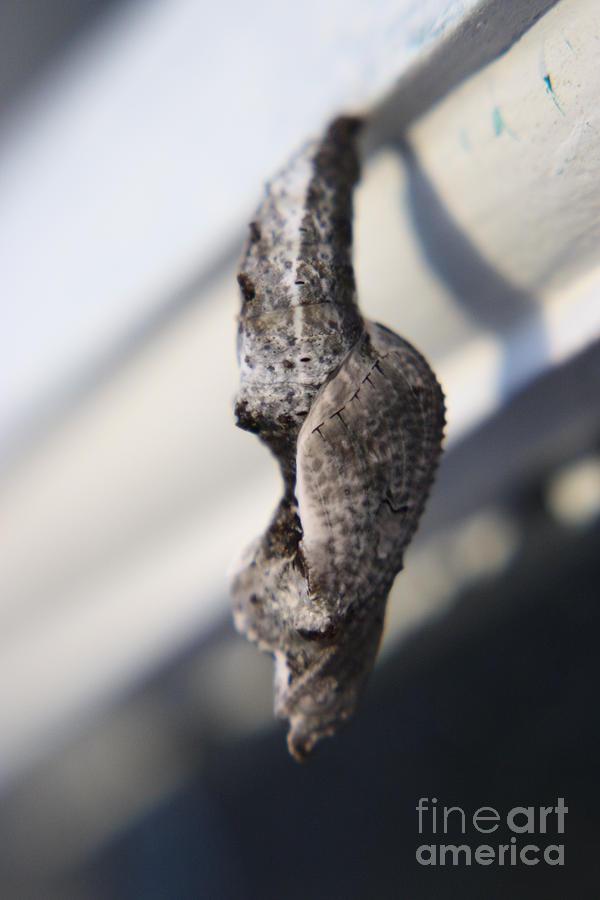 Caterpillar Photograph - Waiting To Fly Viii by Mandy Shupp