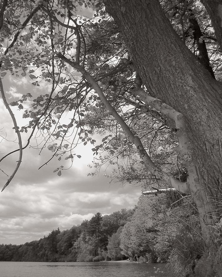 Walden Pond Photograph - Walden Pond by Heather Weikel