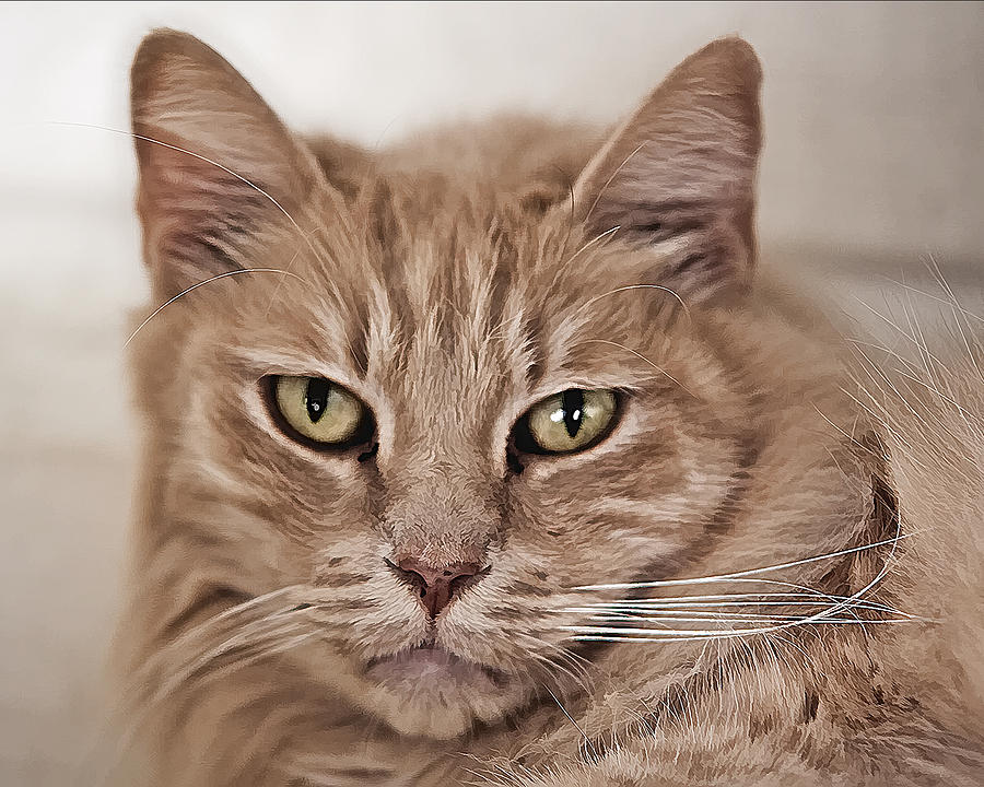 Cat Photograph - Walley by Lynn Andrews