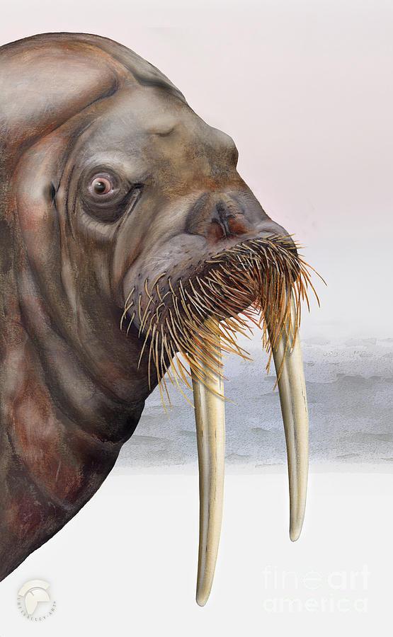 Walrus Odobenus Rosmarus - Marine Mammal - Walross Painting