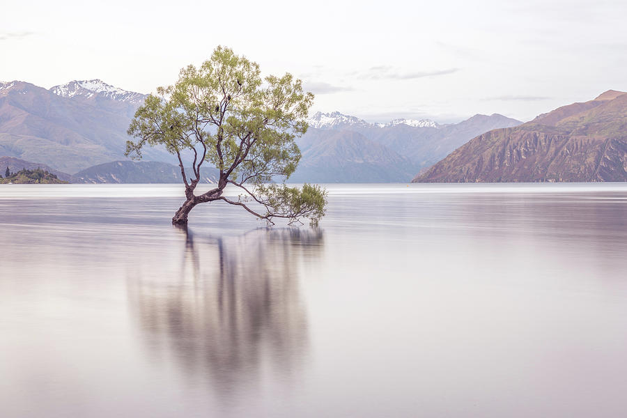 Wanaka Tree Photograph