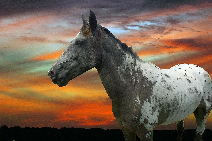 Horse Photograph - War Paint by Robert Anschutz